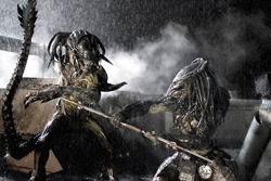 Combat entre Alien et Predator