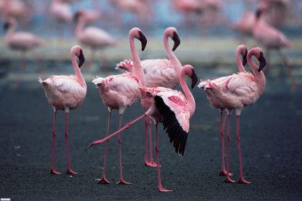 Les ailes pourpres : Docu animalier esthétique et poétique !